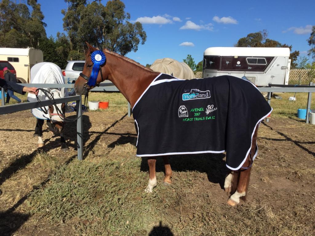 Newbury Park Arabians | Newbury Park Arabians and Ponies